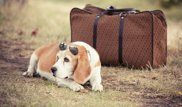 Baggage Information - Aer Lingus